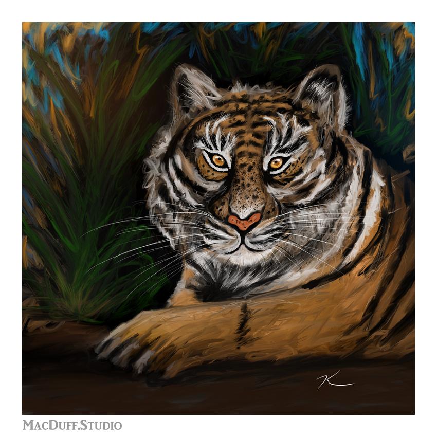 Tiger 3-2018 Karen MacDuff Squires