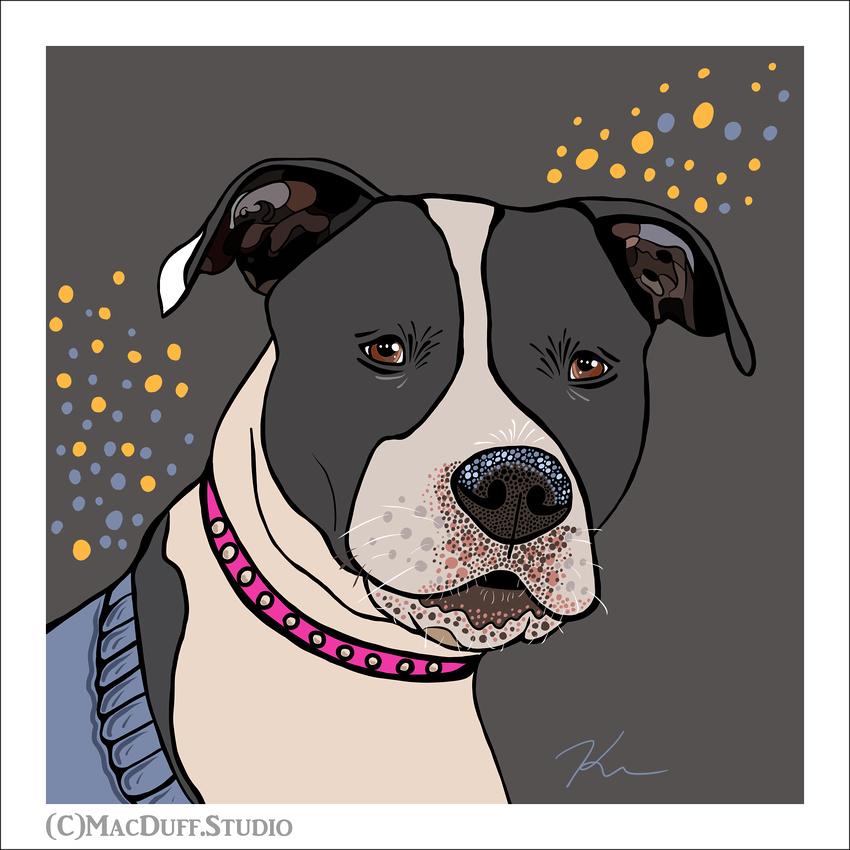 Kayla CAWS dog Drawn Feb 2018 -Karen MacDuff Squires FRAME SIG